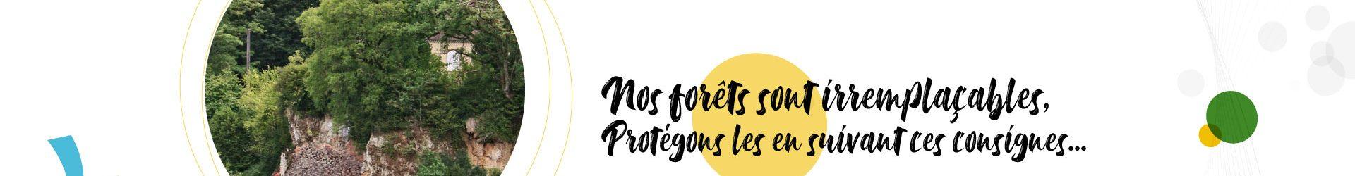 Protégeons nos forêts