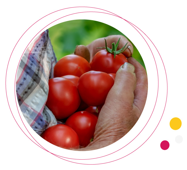 produits locaux cantines communauté de communes vallée dordogne forêt bessède